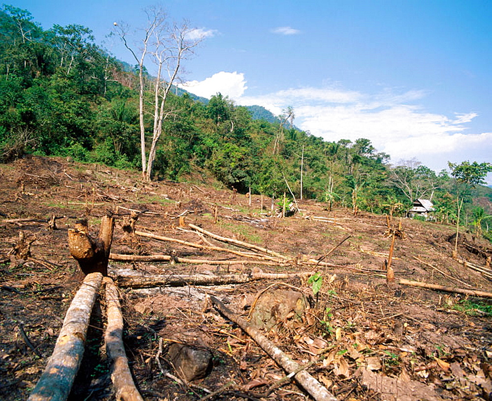 Deforestation and topsoil