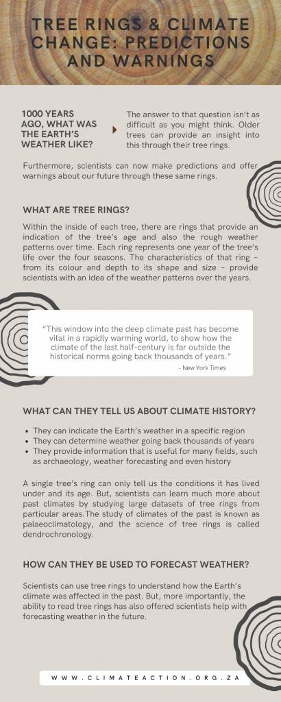 Tree Rings & Climate Change: Predictions and Warnings infographic